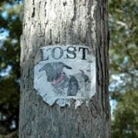 239: Lost in America